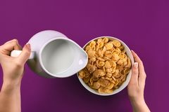 Food and people concept - hands of woman eating cereals corn flakes for breakfast and pouring milk. On the colorful background. Purple background, top view Royalty Free Stock Photos