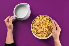 Food and people concept - hands of woman eating cereals corn flakes for breakfast and pouring milk. On the colorful background. Purple background, top view Royalty Free Stock Images