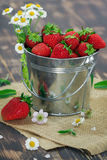 Food Photography strawberries in a small tin. Bucket on a rough burlap cloth on a table of dark planks with flowers of chamomile and mint leaves royalty free stock image
