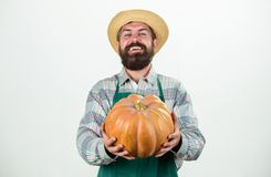 Food photography. useful vegetables. rich autumn crop. seasonal vitamin. organic natural food. happy halloween. healthy. Product. man with pumpkin. bearded man royalty free stock photo