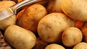 Food - Potato. The Potato is a starchy plant tuber which is one of the most important food crops, cooked and eaten as a vegetable stock footage