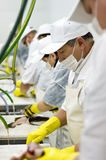 Food processing line. Production line of food processing factory, workers cutting fish royalty free stock images