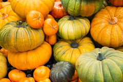 Food, pumpkin. Squash, edible, have orange and blue two, flat or irregular shape of a gourd shape, immature fruit crispy dense succulent, side dishes, do Stock Photography