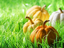Pumpkins on green natural grass Royalty Free Stock Images
