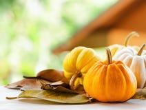 Pumpkins on rural landscape background Stock Photos