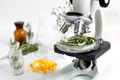 Food quality control in the laboratory rosemary. No one Royalty Free Stock Photography