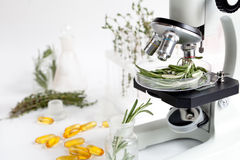 Food quality control in the laboratory rosemary. No one Royalty Free Stock Image