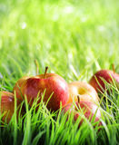 Red apples on green grass Stock Photo