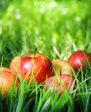 Red apples on green grass Royalty Free Stock Photo