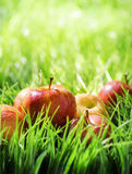 Red apples on green grass Stock Photography