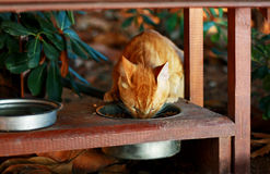 Food for red cat. Royalty Free Stock Photos