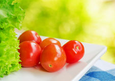 Red tomatoes and green lettuce Stock Image