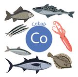 Food rich with cobalt.. A set of organic organic foods with a high content of mineral Royalty Free Illustration