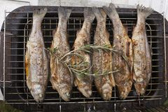 Preparing fresh fish trout on electric grill Royalty Free Stock Photography