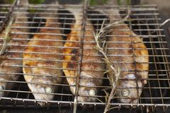 Preparing fresh fish trout on electric grill Royalty Free Stock Image
