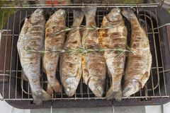 Preparing fresh fish trout on electric grill Stock Photo