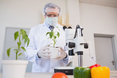 Food scientist looking at green plant Stock Images