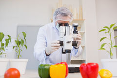 Food scientist looking through a microscope. In laboratory stock photos