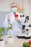 Food scientist working attentively with red pepper Stock Image