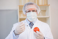Food scientist working attentively with red tomato Stock Image
