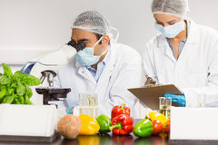 Food scientists using the microscope for research Royalty Free Stock Image
