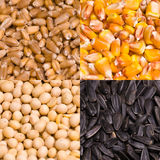 Food Seeds Stock Photos