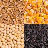 Food Seeds stock photos