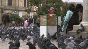 Food sellers for pigeons in Murillo Square in La Paz, Bolivia stock video