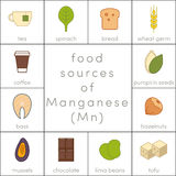 Food sources of manganese. Flat food icons for infographic Stock Photos