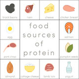 Food sources of protein. Elements for infographic Stock Photography
