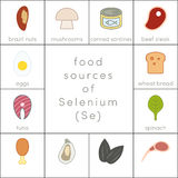 Food sources of selenium. Flat food icons for infographic Royalty Free Stock Photo