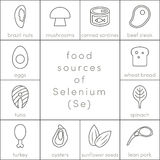 Food sources of selenium. Outline food icons for infographic Stock Images
