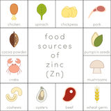 Food sources of zinc. Flat food icons for infographic Royalty Free Stock Images