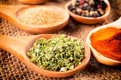 Food spices Stock Photography