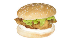 Food Stock. Chick burger which can be used for your food menus Stock Image