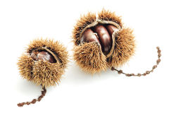 Food: sweet chestnut on white background Stock Photography