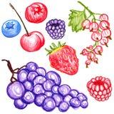 Food vector berries Royalty Free Stock Photos