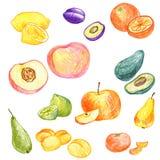 Food vector elements Stock Photo