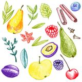 Food vector elements Stock Photos