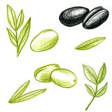 Food vector olives and leaves Royalty Free Stock Photo