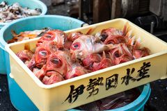 Food Waste In The Japanese Restaurant At Fish Market. Head Of Red Fish With Big Eyes In The Tray. Food Waste In The Japanese Restaurant At Fish Market royalty free stock photo