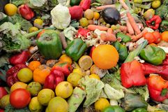 Food Waste. Rotten fruit and vegetable waste in a dumpster stock photography
