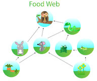 Food web. Cartoon vector design Stock Image