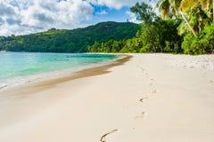 Foodprint på strandsanden i Seychellerna, Mahe Island Palmträd i abckground royaltyfri foto
