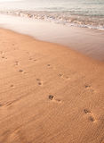 Foodprints on the Sand, Portugal. Footprints on a beach in Albufeira, Portugal Royalty Free Stock Image