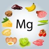 foods som är rika i magnesium vektor illustrationer