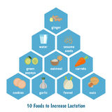 Foods to increase lactation. Infographic presentation to increase lactation royalty free illustration