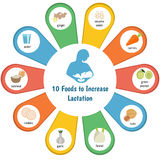Foods to increase lactation. Infographic presentation to increase lactation vector illustration