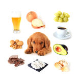 Foods toxic to dogs Royalty Free Stock Photography