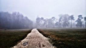 Foog in het park met effekt stock fotografie